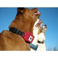 Rad Dog: Retractable Leash