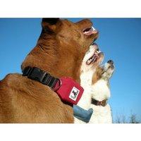Rad Dog: Retractable Leash