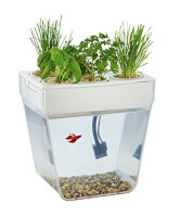 Self-Cleaning Fish Tank That Grows Food