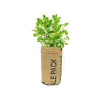 Urban Agriculture: Herb Organic Grow Kit - Mint