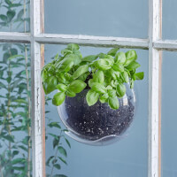 Window Plant Pod