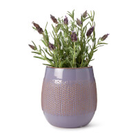 Self-Watering Lavender Grow Kit