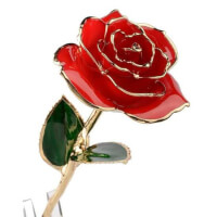 Real Rose Dipped In 24K Gold