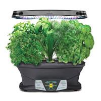 Indoor Garden (Herb, Flowers, Veggies, More)