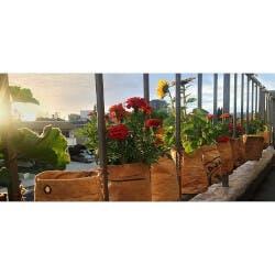 Organic Grow Kits