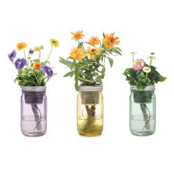 Mason Jar Indoor Flower Garden