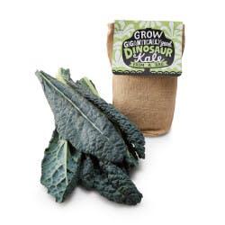 Kale In A Bag Grow Kit