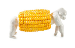 """King Corn"" Porcelain Corn Holder"