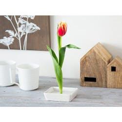 Florida Vase: Floating Flower Pin Vase