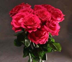 One Dozen Roses In A Wax Paper Bundle