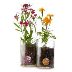 Unique 70th Birthday Gifts:Birth Month Flower Grow Kit