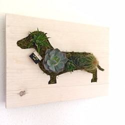 Custom Doxie Dachshund Succulent Wall Art